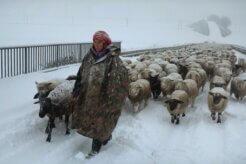 Winter Nomads
